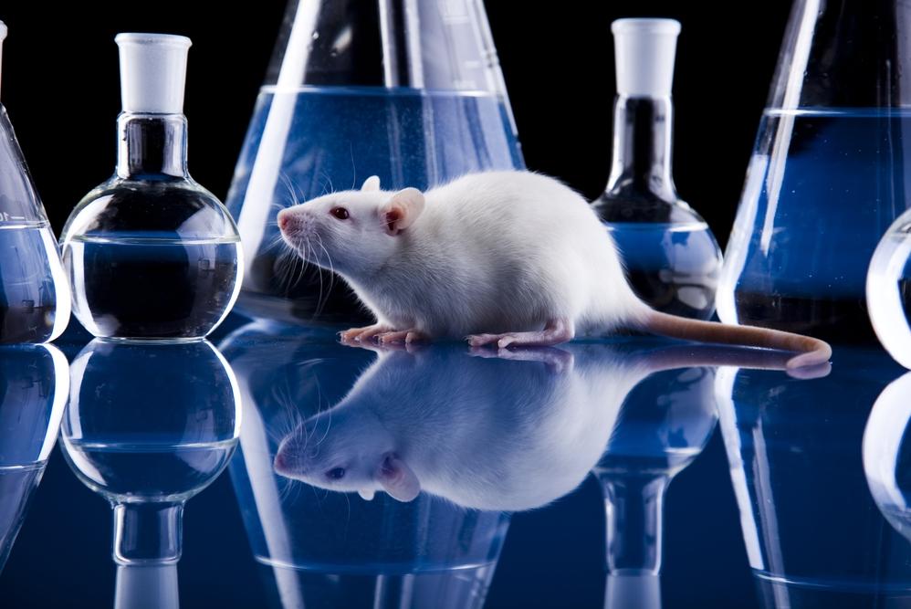 лаборатория крыски