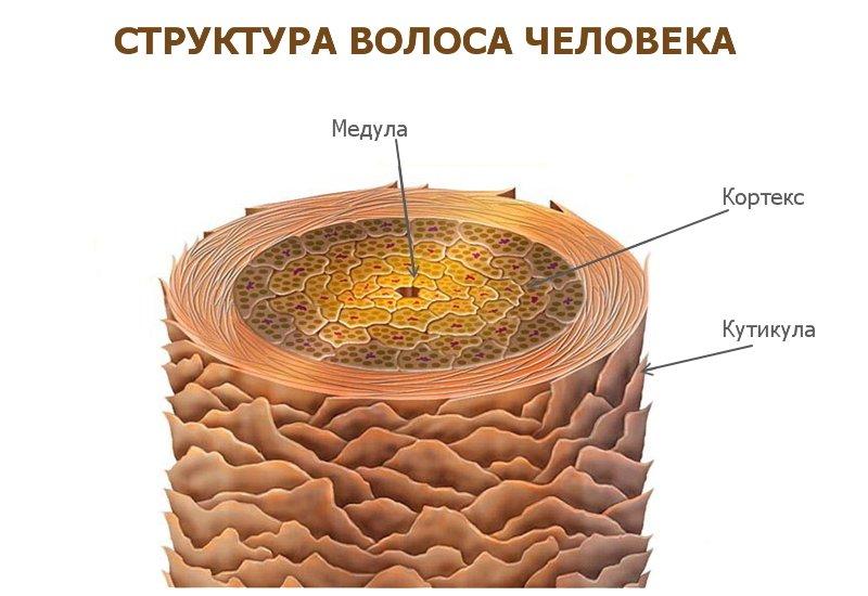 структура волоса 2